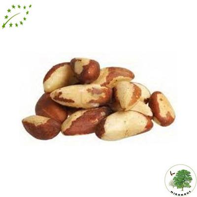 Eco Nueces Brasil